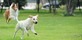 Atlanta Dog Parks Encourage Puppy Love